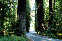 Avenue of the Giants (15)