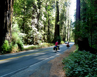 Avenue of the Giants (19)
