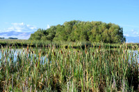 Ninepipe National Wildlife Refuge (3)