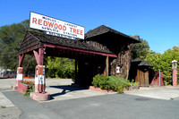 Redwood Tree Gas Station (1)