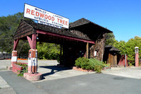 Redwood Tree Gas Station (3)