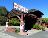 Redwood Tree Gas Station (2)