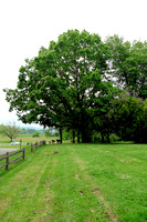 Bybee Howell Farm (13)