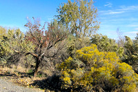 Sagebrush & Goldenrod